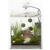 Nano Aquarium Süßwasser