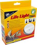 Lucky Reptile Life Light Multicolor