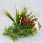 Sydeco Composition Tropical, 20 cm high