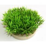 Sydeco Green moss, 7 cm high