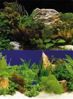 Hobby Folienrückwand Zuschnitt Pflanzen 2 / 7 SB 120 x 50 cm