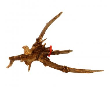 Friscer Bonsai Driftwood 10 - 20 cm