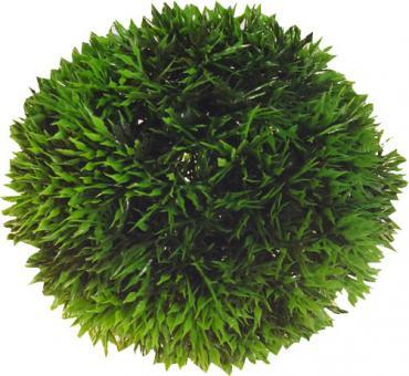 Hobby Plant Ball SB