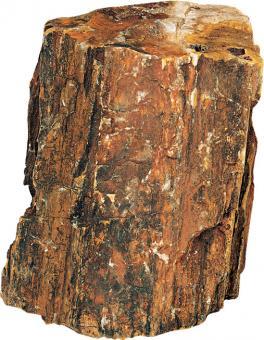 Hobby Petrified wood L - 2,2 - 4 kg