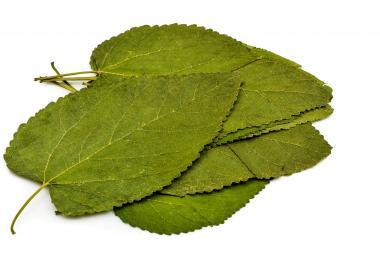 Terra Natur Maulbeeren Blätter - 12 Blatt jetztbilligerkaufen