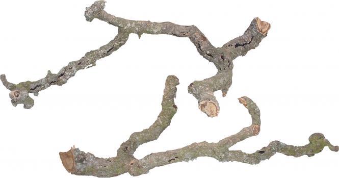 Lucky Reptile Tronchos Cork Branches
