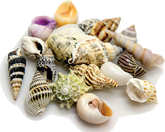 Hobby Sea Shells Set SB