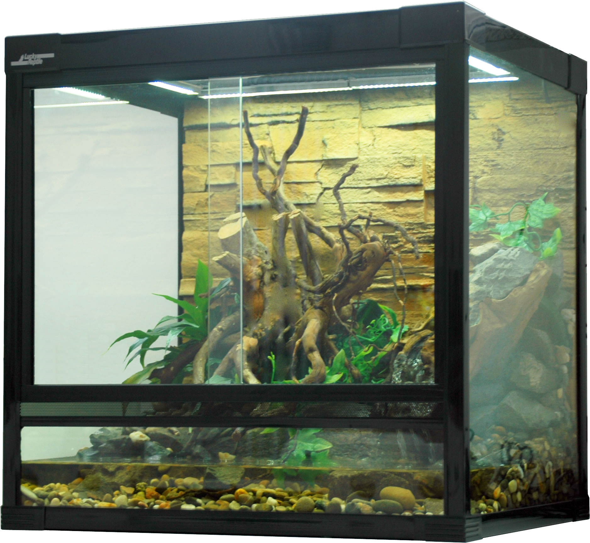 Aquaristic Net Lucky Reptile Fire Bellied Toad Terrarium