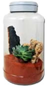 Lucky Reptile InsectTarrium 5 l