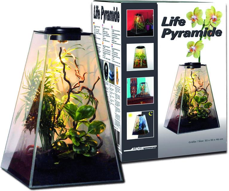 Lucky Reptile - Life Pyramide