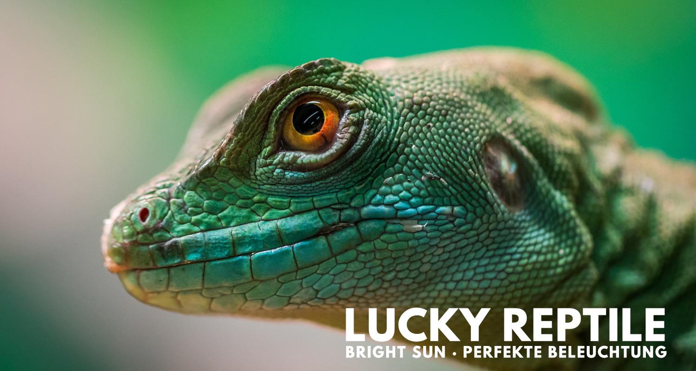 Lucky Reptile Bright Sun Terrarium Beleuchtung