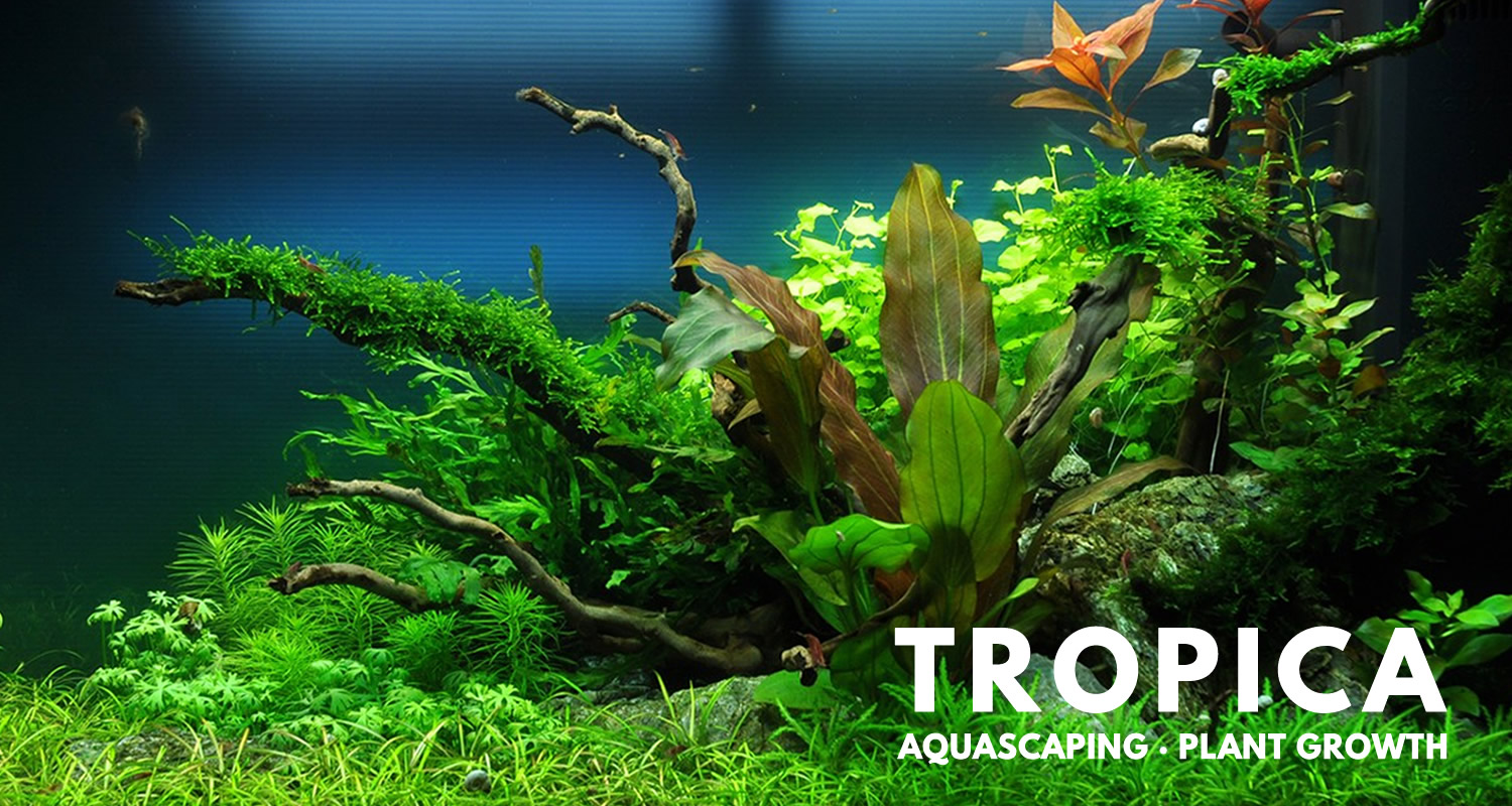 Wonderful aquariums with Tropica products